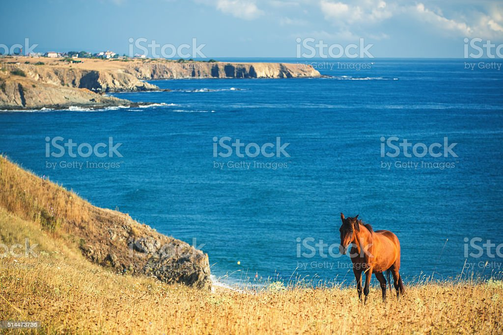 Wild horse in front of the sea at sunrise stock photo