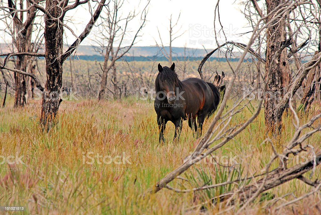 wild horse in Mesa Verde by Lisa Woodburn stock photo