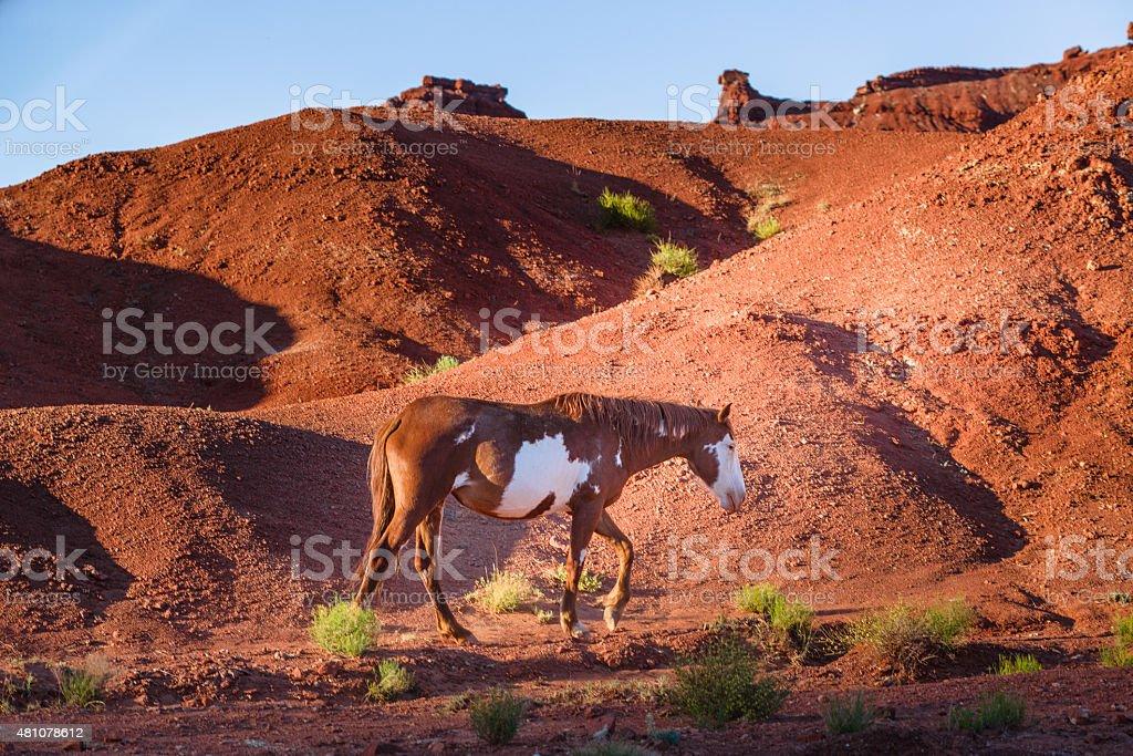 Wild horse in Monument Valley, Arizona stock photo
