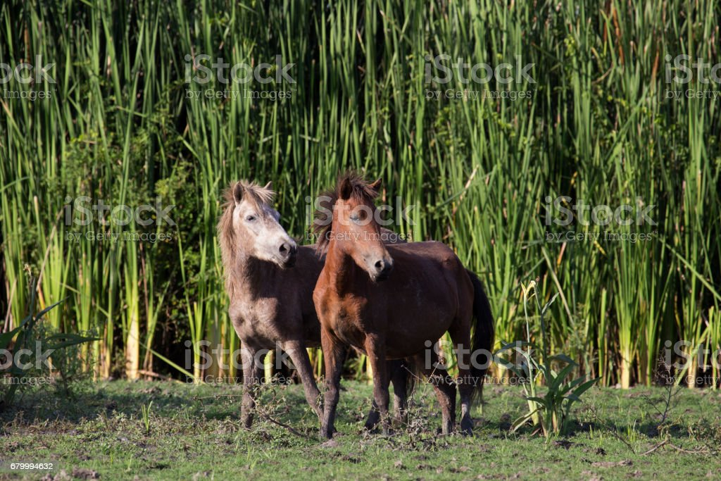 wild horse in the field stock photo