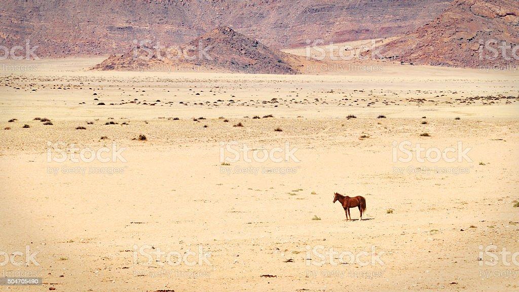 Wild horse in the Namibian desert stock photo