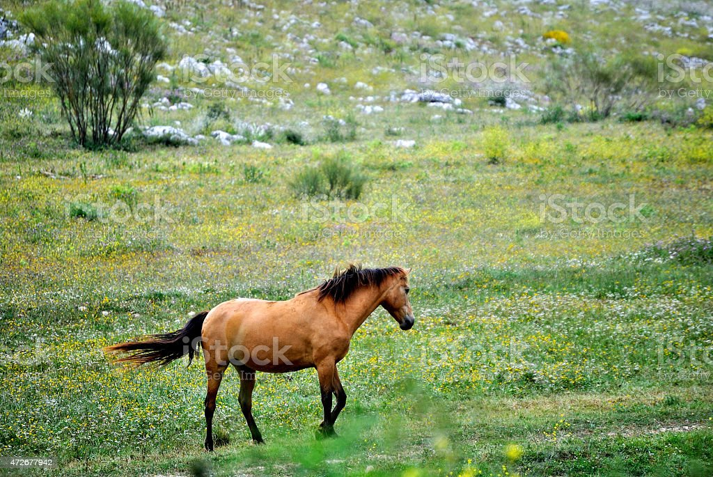 Paisaje caballo salvaje stock photo