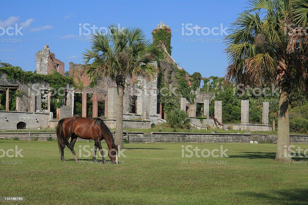 Wild Horse on Cumberland Island stock photo
