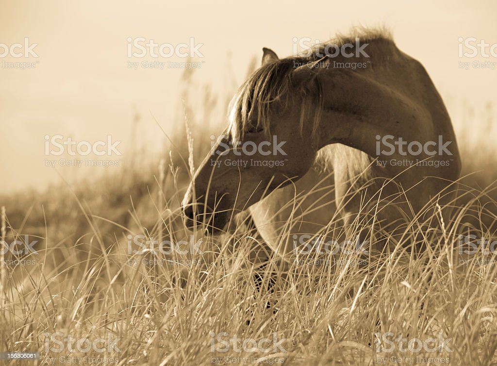 Wild Horse on the beach stock photo
