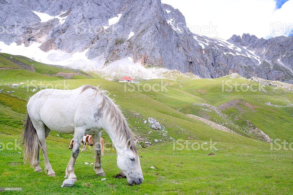 Wild horse. stock photo