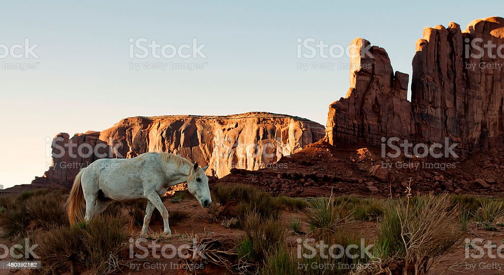 Wild horse walking in Moument Valley stock photo