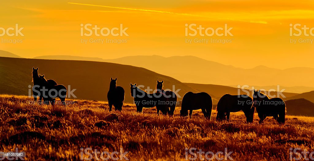 Wild Horses at Sunset stock photo