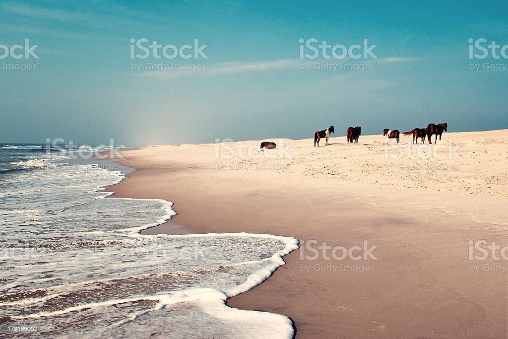 Wild horses at the beach stock photo