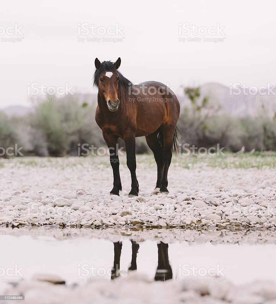 Wild horses by the river. royalty-free stock photo