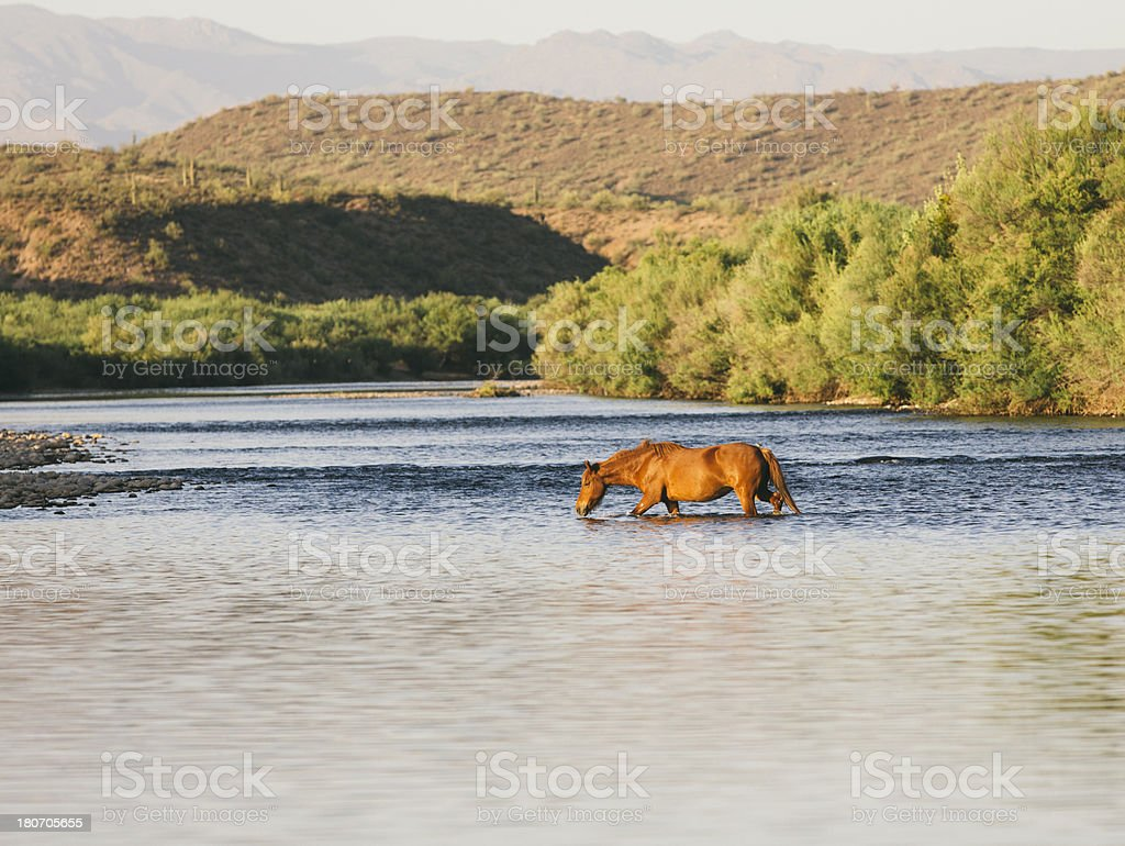 Wild horses by the river royalty-free stock photo