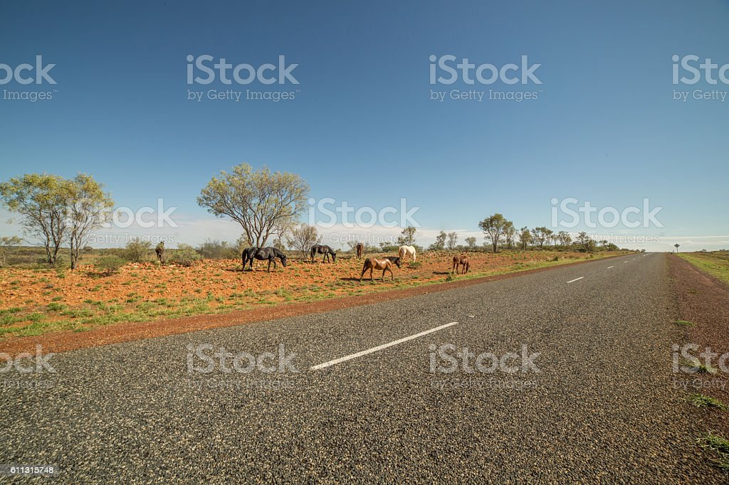 Wild horses by the roadside stock photo