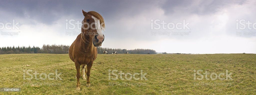 Wild horses, dramatic skies royalty-free stock photo