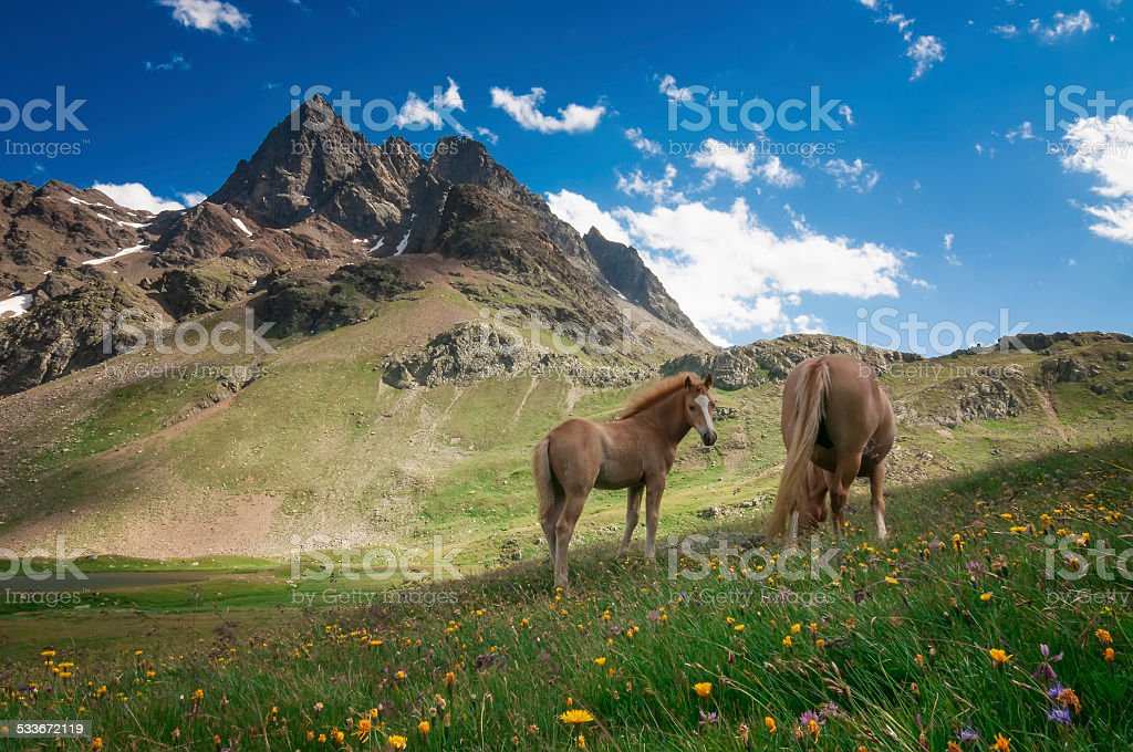 Wild horses in the mountains stock photo