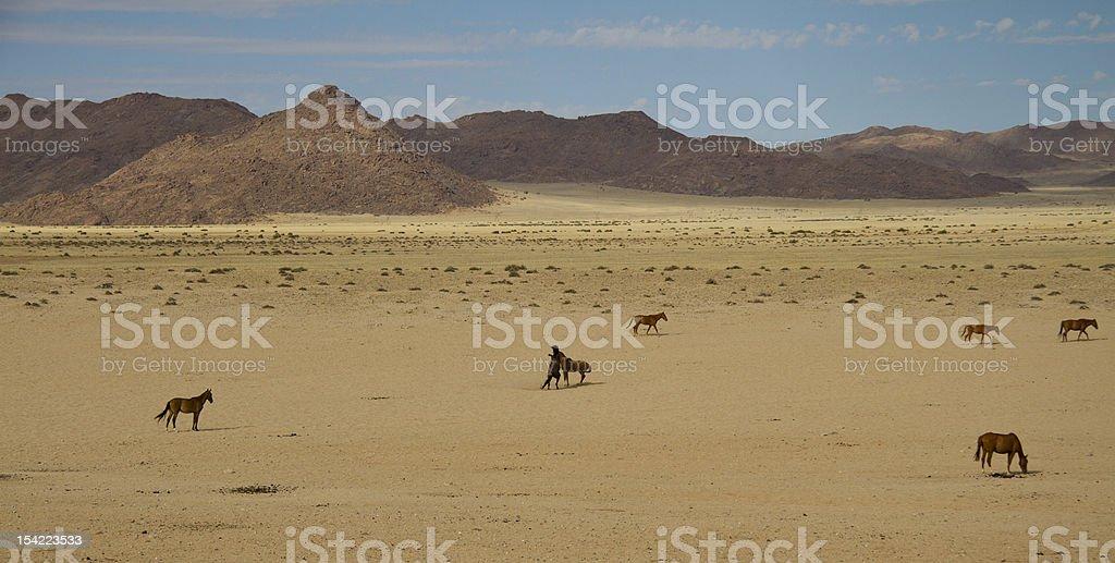 Wild horses in the Namib desert stock photo