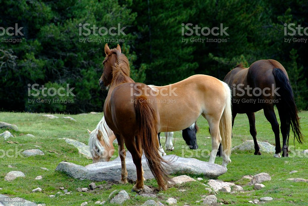 Wild horses in the nature stock photo
