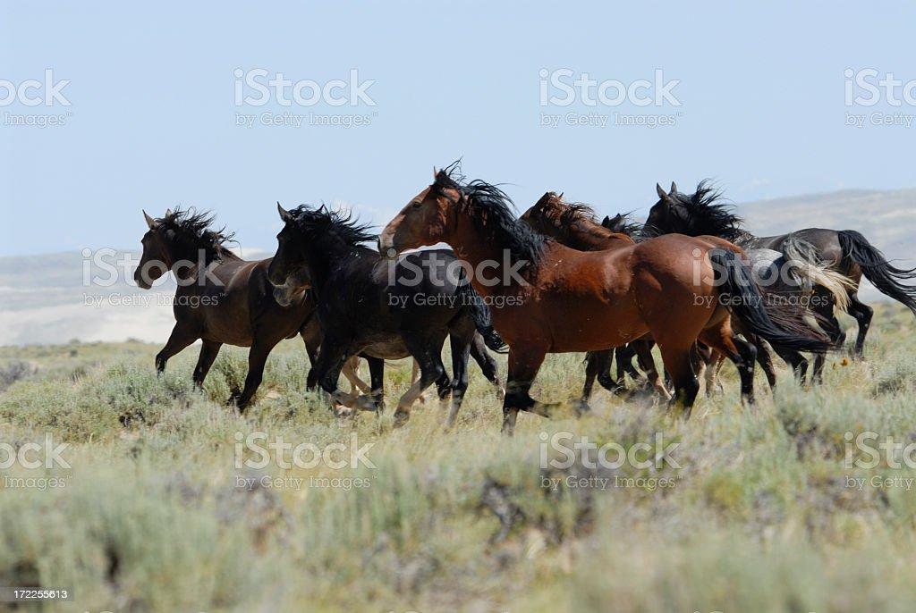 Wild Horses of Wyoming stock photo