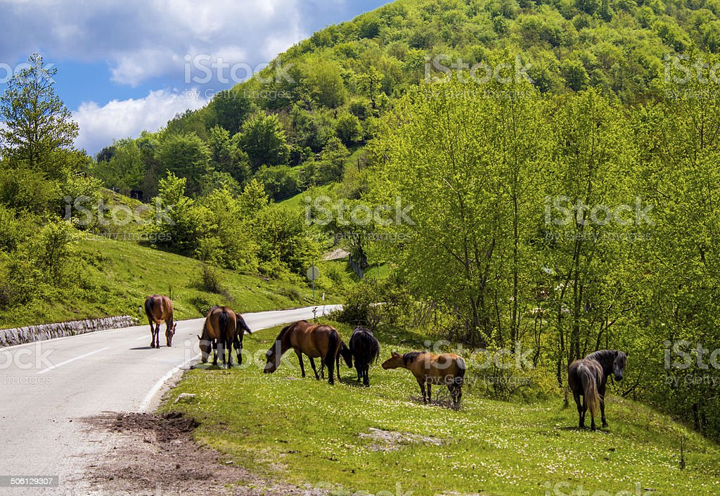 Cavalos selvagens na estrada foto royalty-free