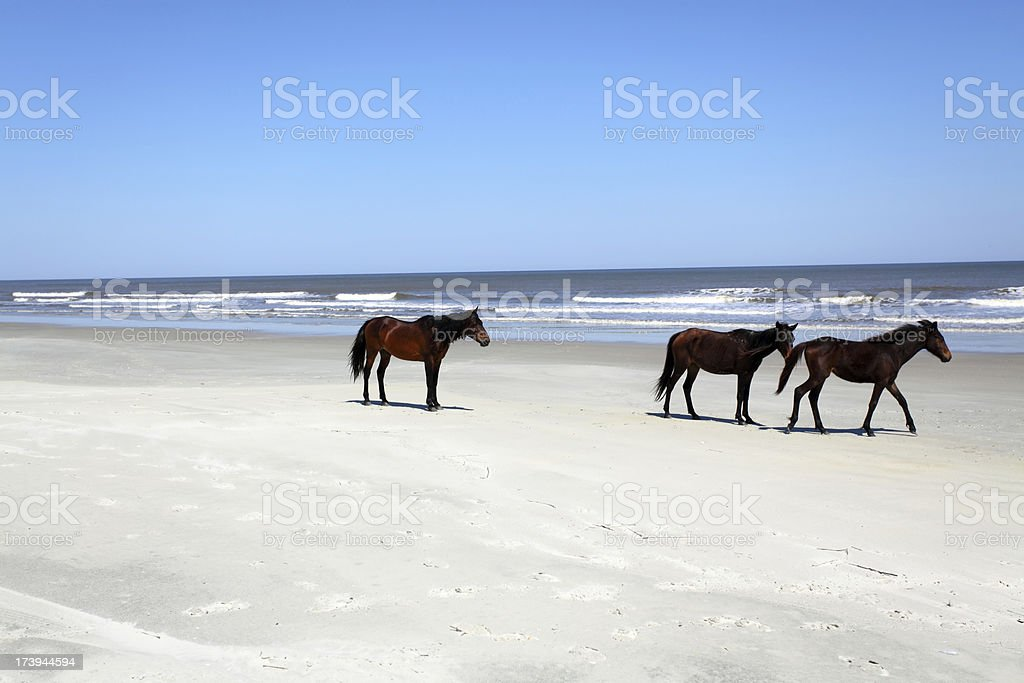 Wild Horses royalty-free stock photo