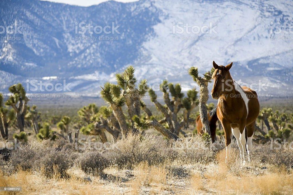 Cavalli selvaggi foto stock royalty-free