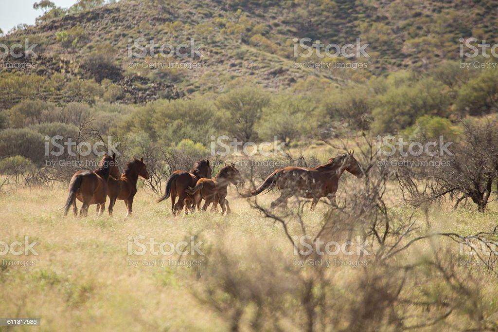 Wild horses running away, Australia stock photo
