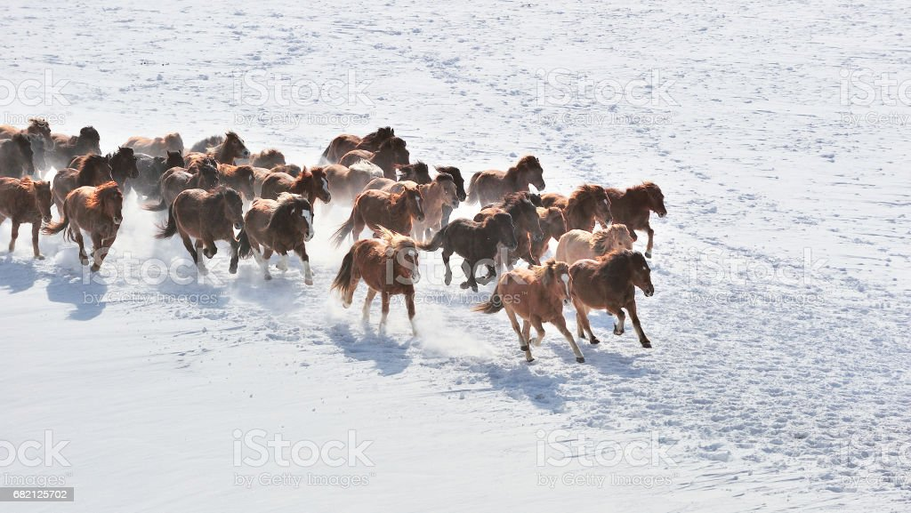 Wild Horses Running stock photo