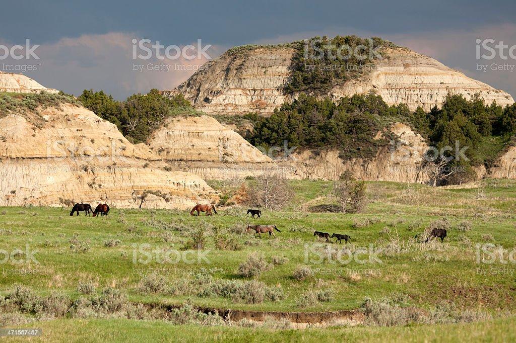 Wild horses Theodore Roosevelt National Park North Dakota royalty-free stock photo
