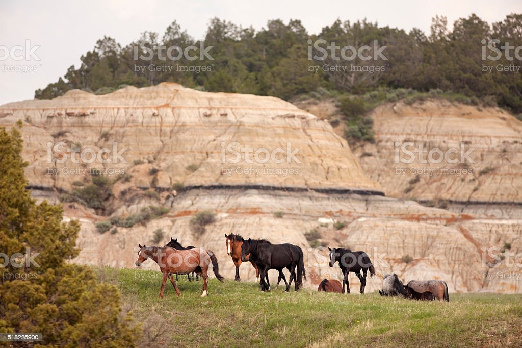 Wild horses Theodore Roosevelt National Park North Dakota stock photo