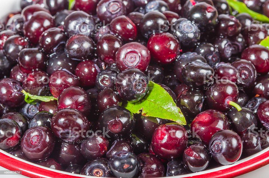 Wild huckleberries freshly picked stock photo