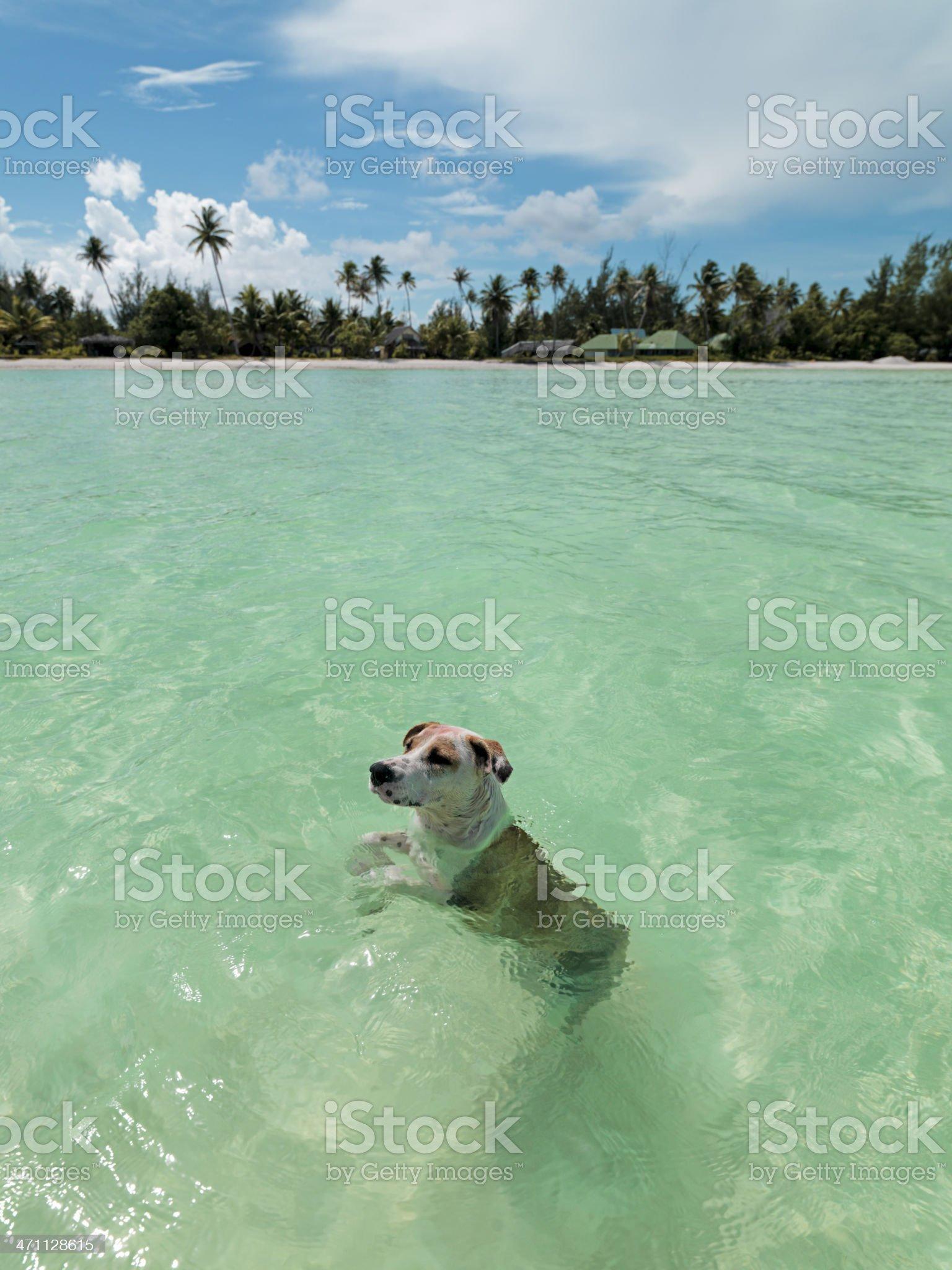 Wild Lagoon Dog royalty-free stock photo