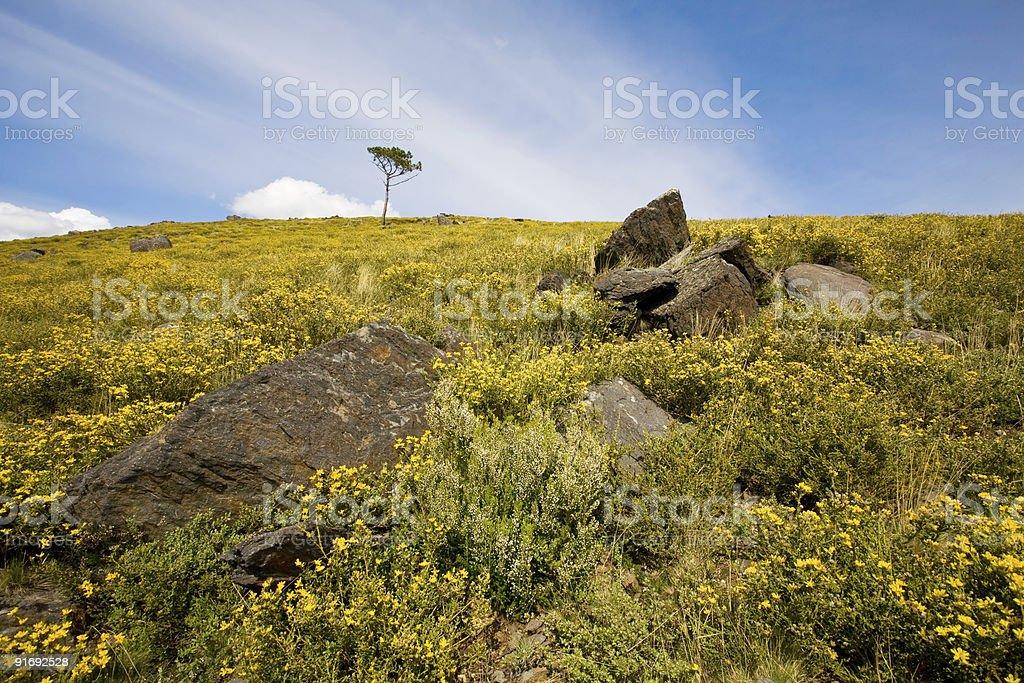 Wild Landscape royalty-free stock photo