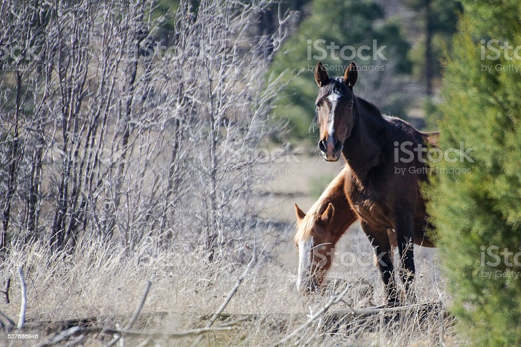 Wild mare and yearling stock photo