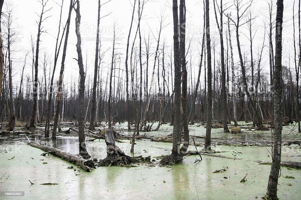 Wild marsh stock photo