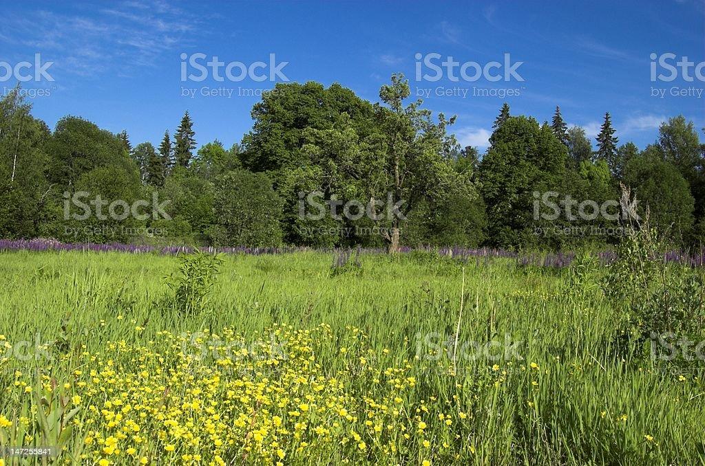 Wild Meadow royalty-free stock photo