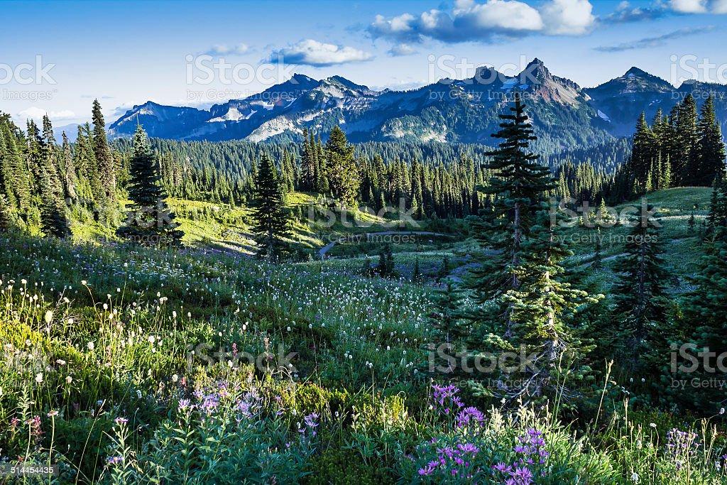 Wild meadows and mounts range stock photo