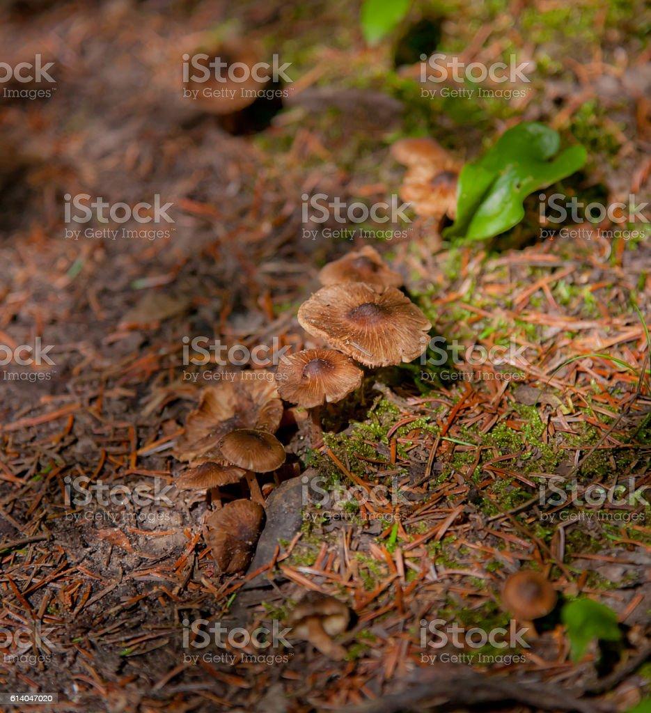 Wild mushroom caps stock photo