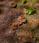 Wild mushroom caps