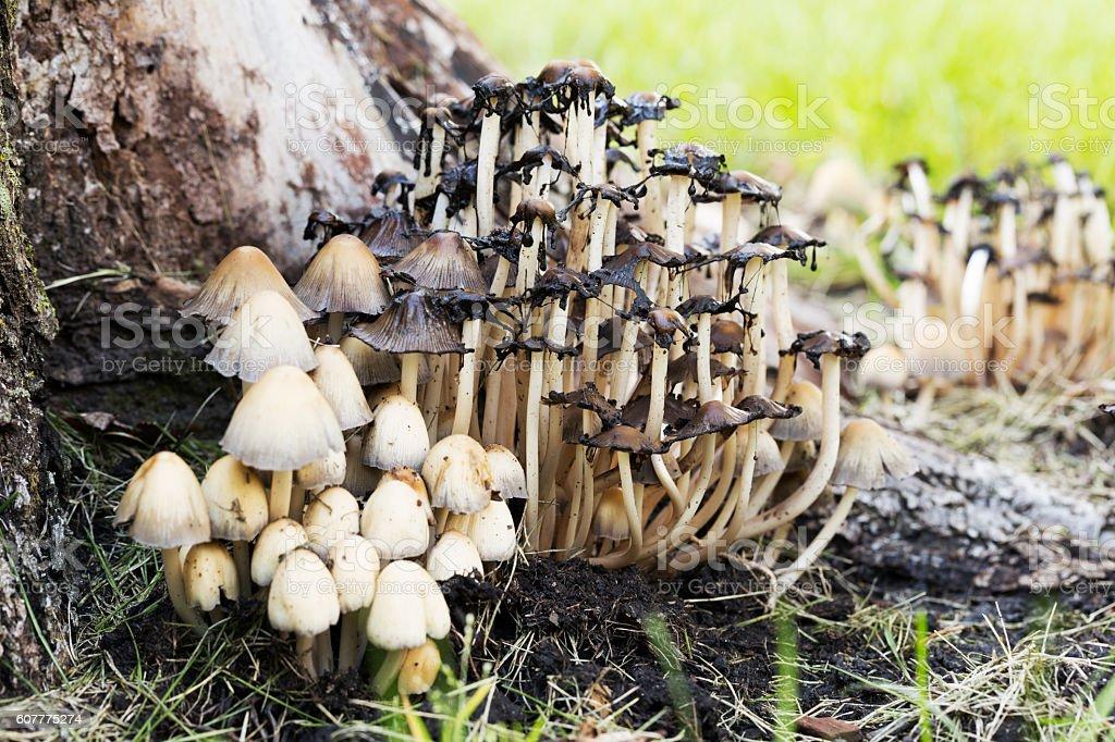 Wild Mushrooms in Autumn stock photo