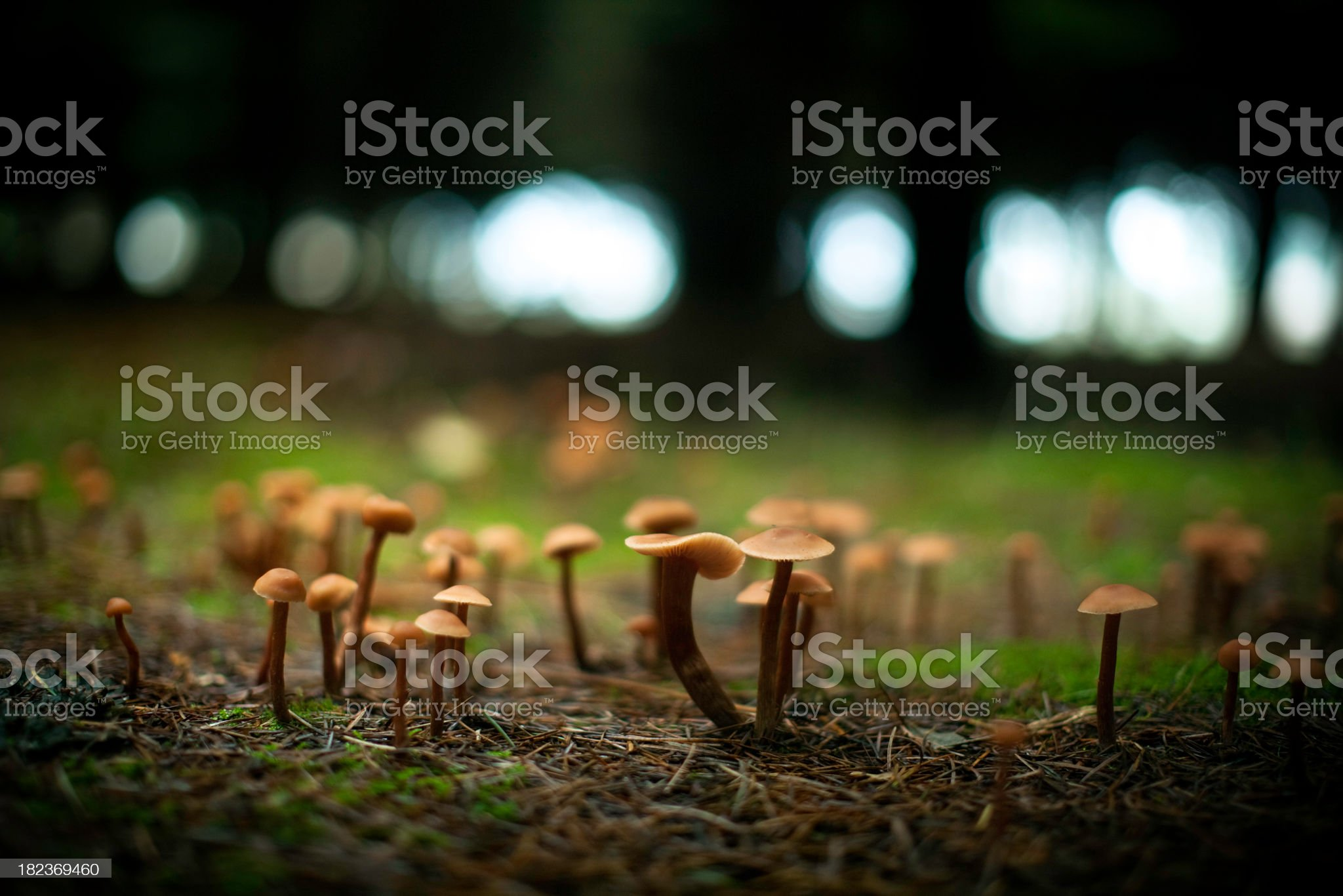 Wild Mushrooms In Forest Setting royalty-free stock photo