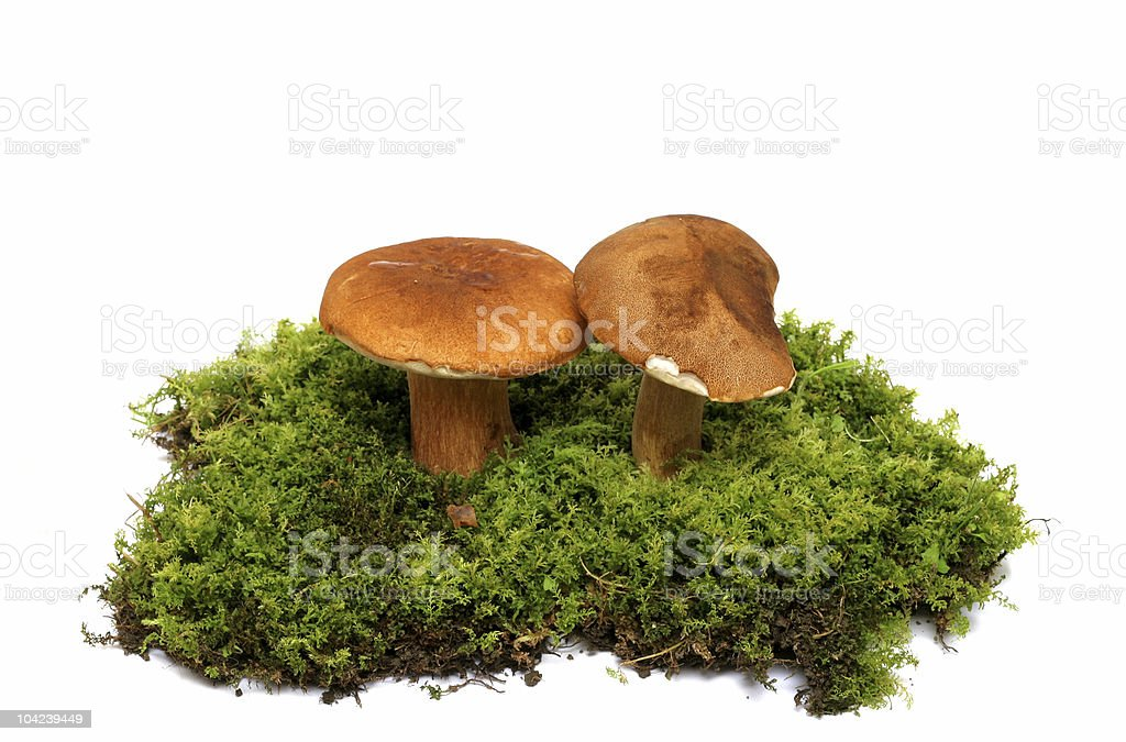 Wild Mushrooms stock photo