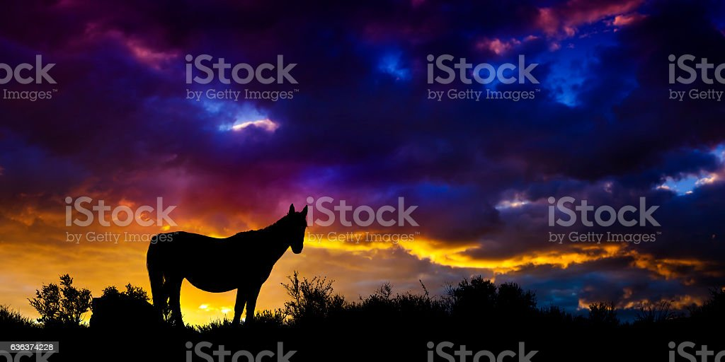 Wild Mustang Horse in the Nevada desert at sunset stock photo