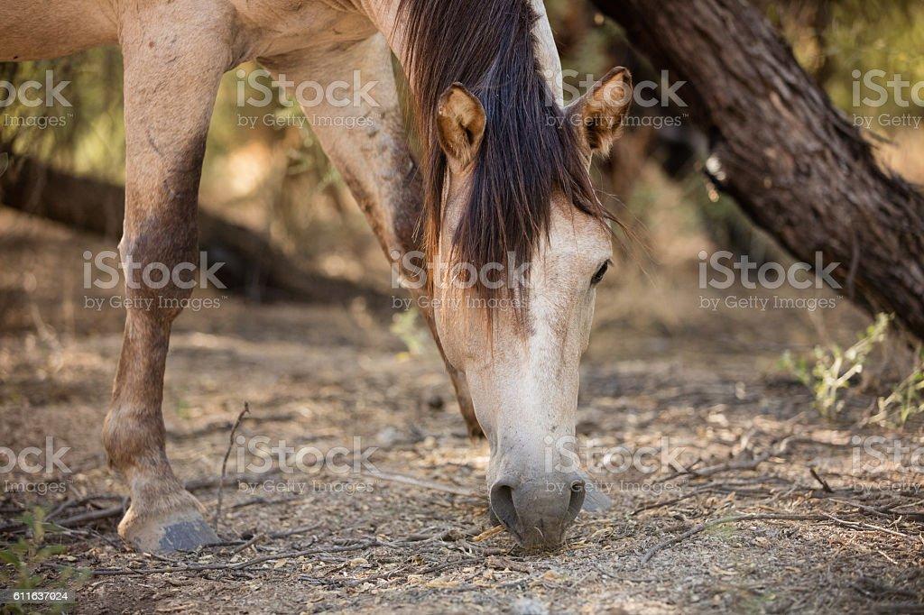 Wild Mustang Horse stock photo