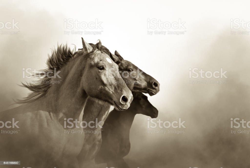 Wild mustang horses stock photo