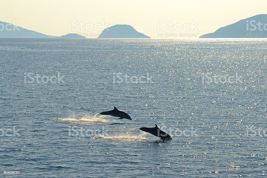 Wild nature background - Photo of two jumping dolphins stock photo
