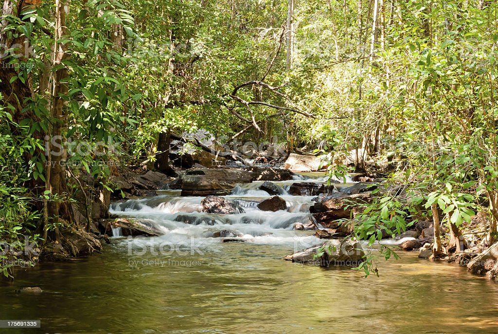 Wild nature in Litchfield National Park, Australia royalty-free stock photo