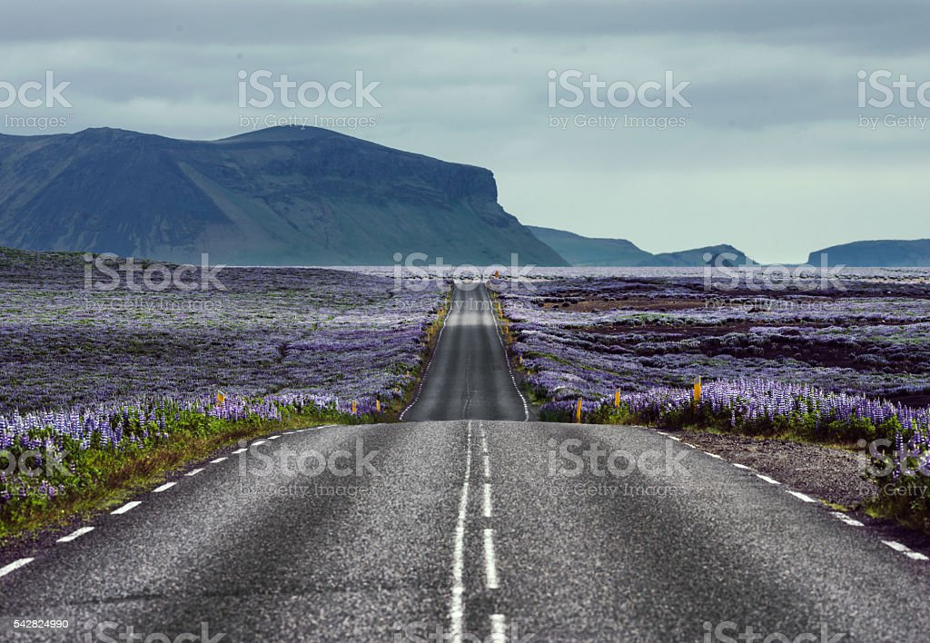Wild nature of an Iceland stock photo