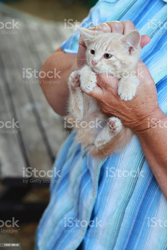 wild orange farm kitten being held for the first time stock photo