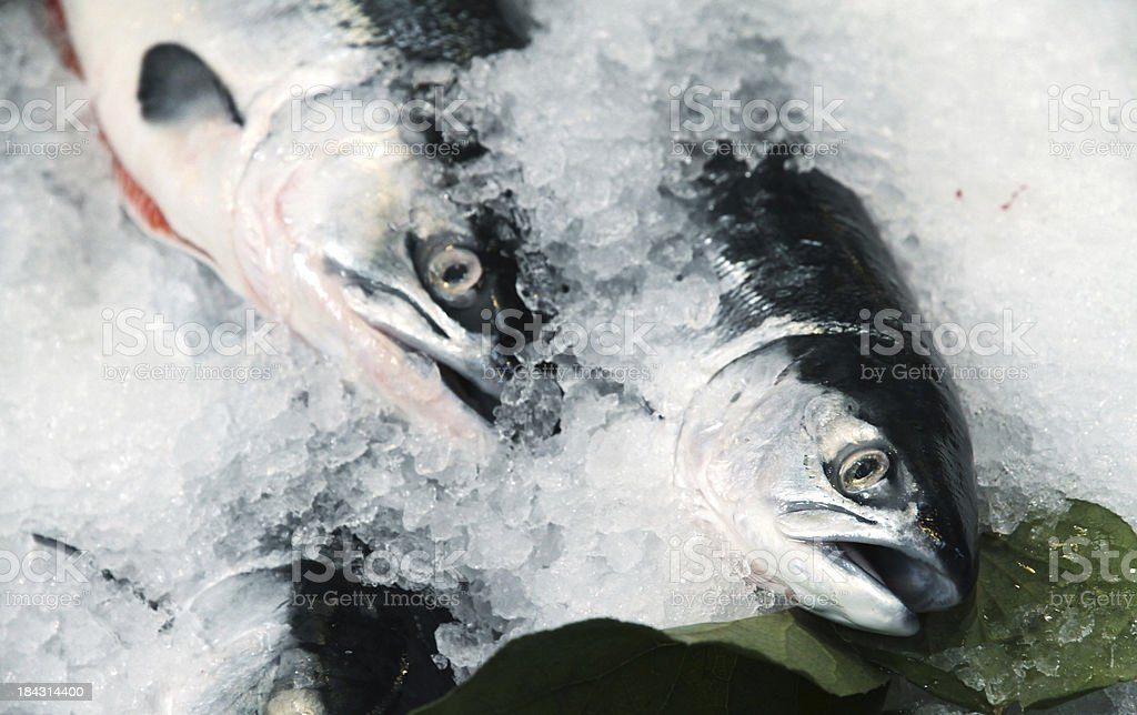 Wild Pacific Salmon on ice in Fish Market royalty-free stock photo