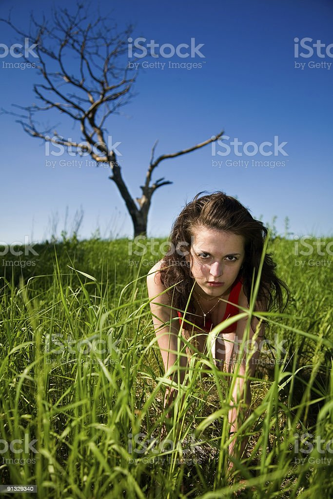 wild passion stock photo