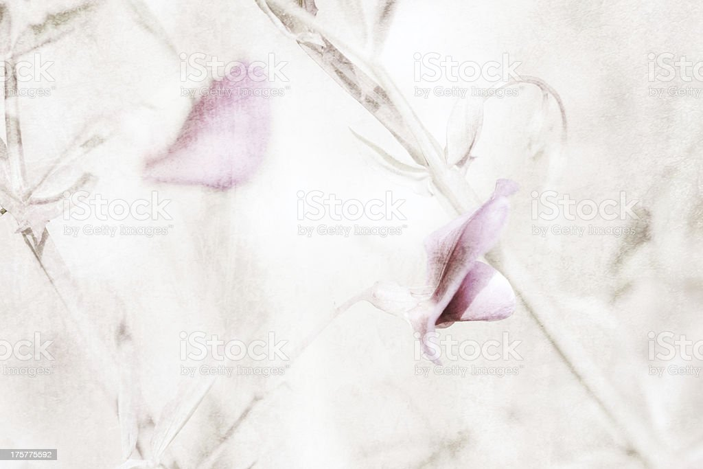 Wild pea flower. stock photo