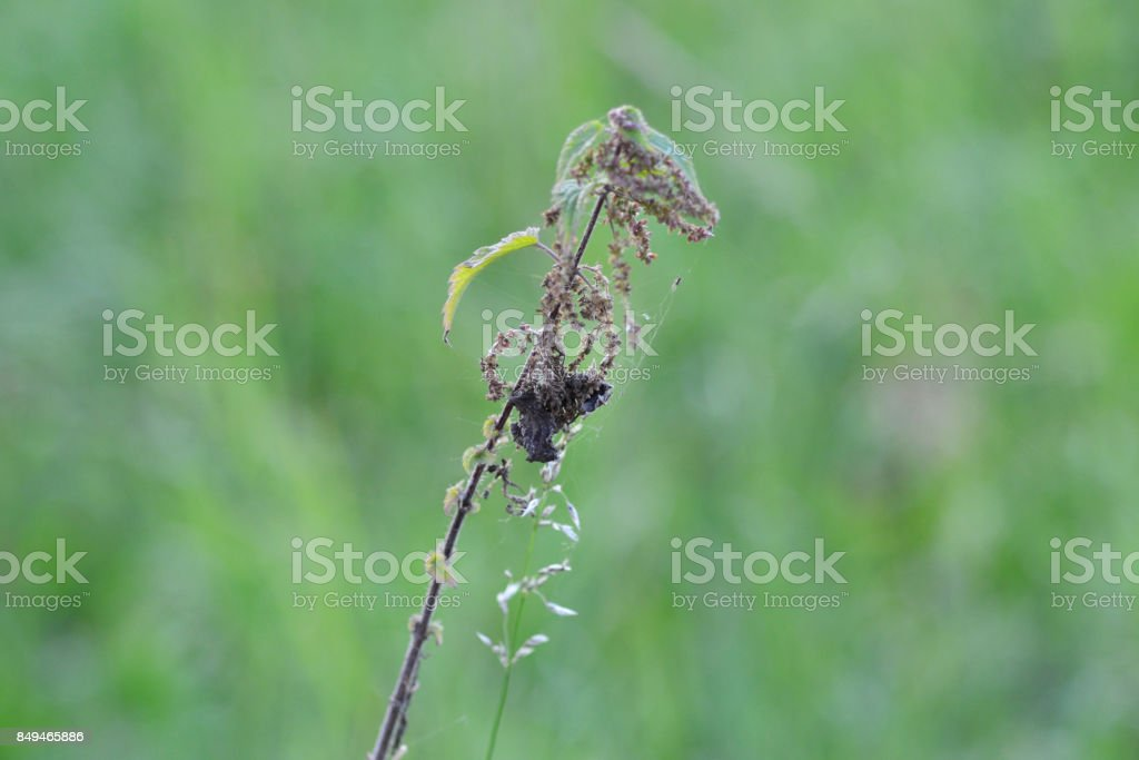 Wild plant in a meadow stock photo